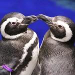 【癒される写真も!】とにかく可愛いペンギンのおもしろ雑学