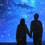 恋するハートをわしづかみ!水族館デートがハズレなしの理由とは?