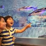親子で一緒に遊んで、学んで。すみだ水族館で親子の絆が深まる!