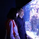 悩める東京の若者たちへ。 水族館デートで恋が叶う必勝法!!