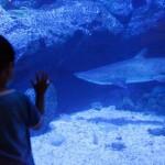お子さまも大人も大満足!親子で楽しむすみだ水族館