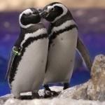 バレンタインは水族館のイベントへ!ペンギンたちも恋の季節♪