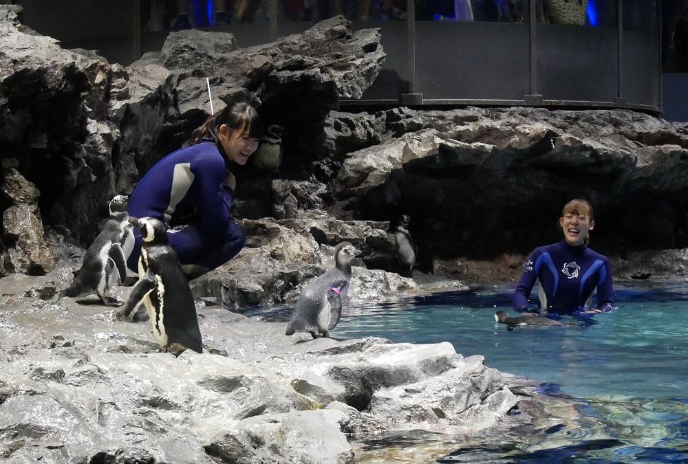 今年3羽目に生まれたマゼランペンギンの赤ちゃんの名前が決定!